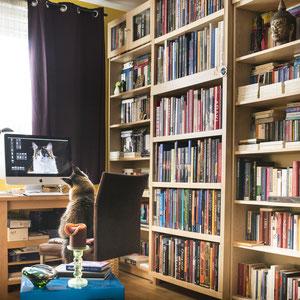 Pixie studiert Domino