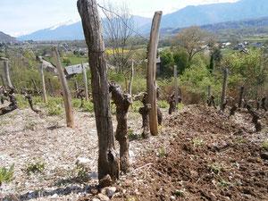 avant/après, travail du sol dans les Mondeuses