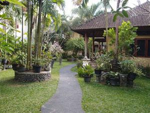 スハティ2012現在の庭
