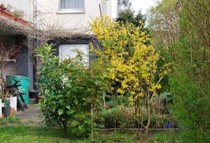Blick vom linken Garten zur Waschküchentür