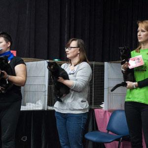 выставка кошек в Уфе