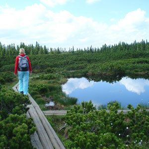 Zondag 28 juni: Picknick wandeling in het Kralingse Bos
