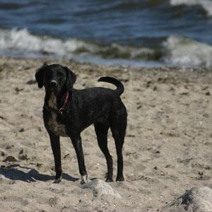 Mein Name ist Jacky und ich finde den Hundestrand in Grömitz einfach klasse !