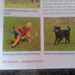 Der Retriever Juni 2012 Foto Blizz