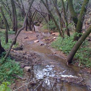 Chautauqua Park stream