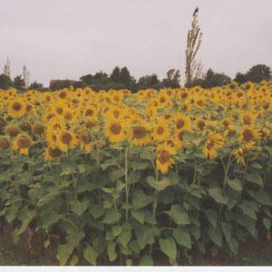 BuGa Park-Nachwachsende Rohstoffe
