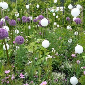 """Allium und """"schwebende"""" Glaskugeln"""
