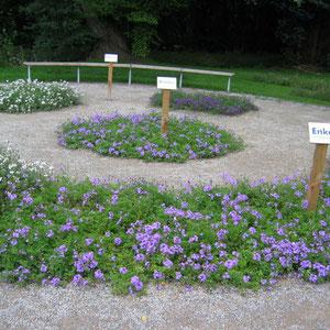 Mendel-Garten