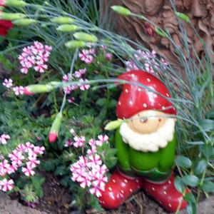 Der Gartenzwerg