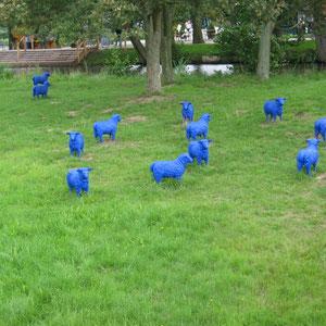 Blaue Schafe auf der Wiese