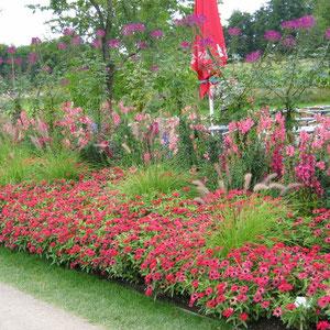 Pflanzbeispiel in Rot