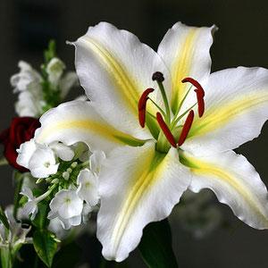 Photo d'une fleur de lys. Source: http://symbolique-eso.blogspot.fr/2013/05/la-fleur-de-lys.html