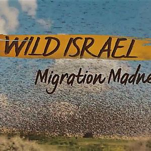 <h3><b>Wildes Israel</h3><p>2016</p><p>Doku: Tierwelt, Reisen</p><p>© Smithsonian Earth</b></p>
