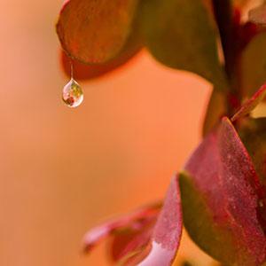 Regentropfen - Ein einzelner Regentropfen an einem roten Blatt