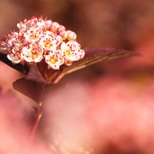 Blüten im Licht der aufgehenden Sonne - Nahaufnahme von Blumen im rosa Licht