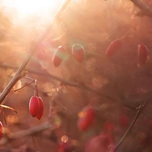 Natur - Macro, Makro, Blumen, Pflanzen, Beeren - Verkauf auf Zoomwork