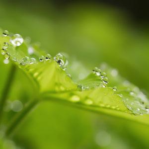 Natur - Macro, Makro, Blumen, Pflanzen, Regentropfen - Verkauf auf Zoomwork