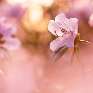 Natur - Macro, Makro, Blumen, Pflanzen, Sonnenaufgang - Verkauf auf Zoomwork