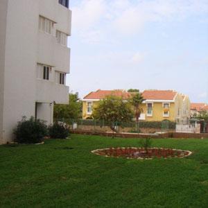 renovated garden