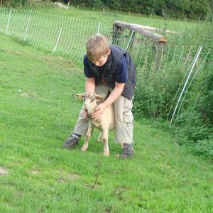 Lucas streichelt die kleinen Ziegen am liebsten.