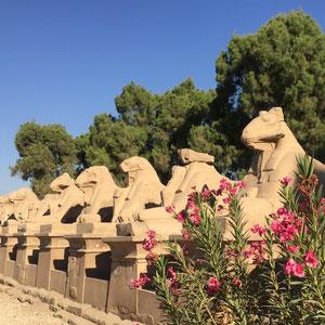 Luxor, Karnak-Tempel, Sphingen-Allee