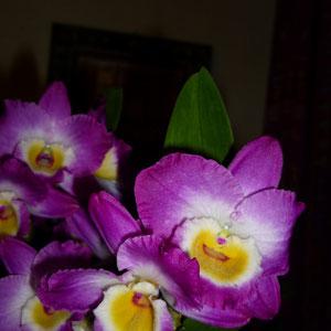 Dendrobium....
