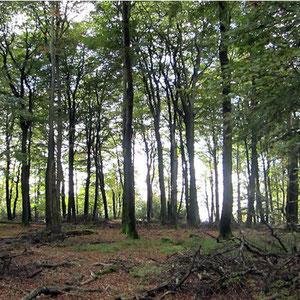 Laubwald im zukünftigen Nationalpark