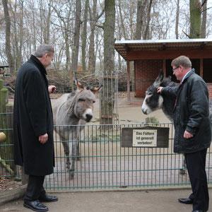 Esel - nur anschauen nicht füttern-mit Holger Stahlknecht