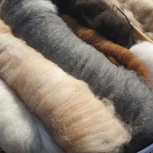 Alpaka Wolle als Vlies