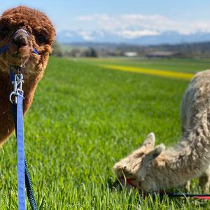 Anna und Alpy beim Spaziergang