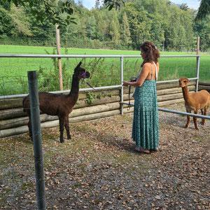 Alpaka Wilma prüft die Lage