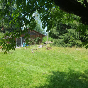 Alpaka Farm in der Schweiz leer
