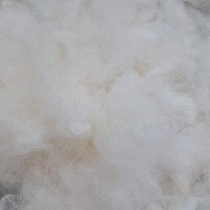 Rohwolle gewaschen