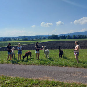 Spaziergang mit den Alpakas