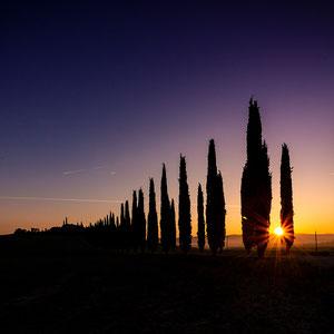 Sonnenaufgang zwischen Zypressen