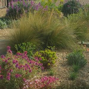 dry garden in april 2017