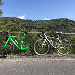 King verde fluo - R838 bianco nero - Tanja & Thorsten König