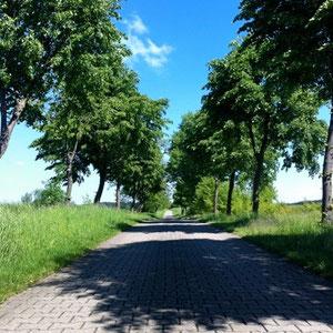 Eine der berühmten Baumalleen in Mecklenburg
