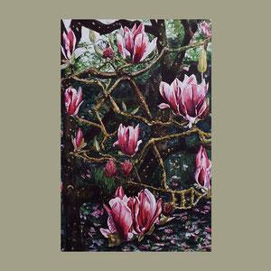 Magnolias, San Francisco Botanical Gardens