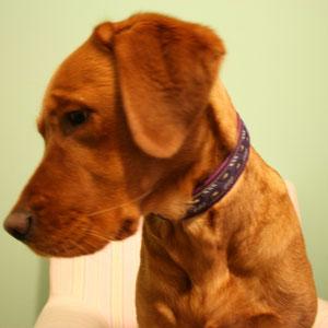 Frau Hund mit lila Halsband
