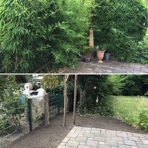 Garten Marl - Bambus entfernen.