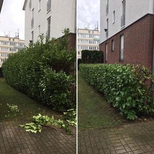 Garten in Recklinghausen - Heckenschnitt