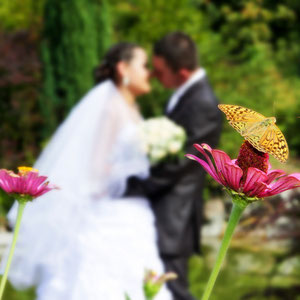 wedding with butterfly
