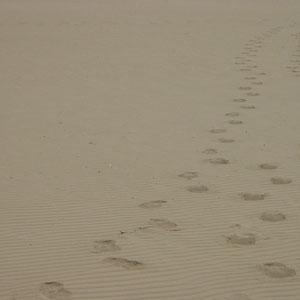 Am Strand von Bibione