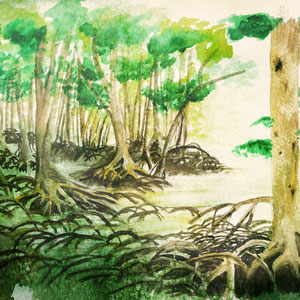 """CD-Bookletseite Mangroovenwald, """"HAVEN"""" von Ravi Srinivasan (2014)"""