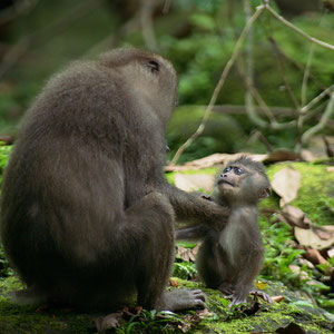 Sipoti mit Affenmutter © Oliver Goetzl
