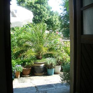 Blick aus der Eingangstür in den Garten