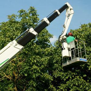 Baumpflegearbeiten mit der Hebebühne