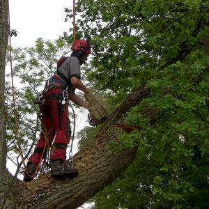 Seilunterstützte Baumklettertechnik