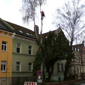 Seilunterstützte Baumklettertechnik (SKT)